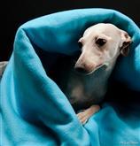 La serie Quilted o Trapuntata è caratterizzata da eleganti e confortevoli tessuti. Il Sacco nanna L