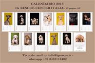 Calendario 2017 13 Pagine in formato A3 di bellissime fotografie. Ottima idea